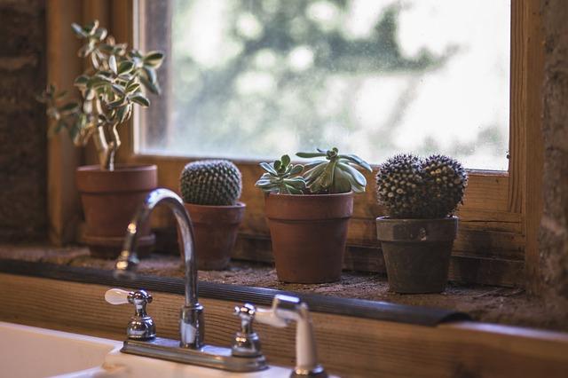 6 nenáročných izbových rastlín