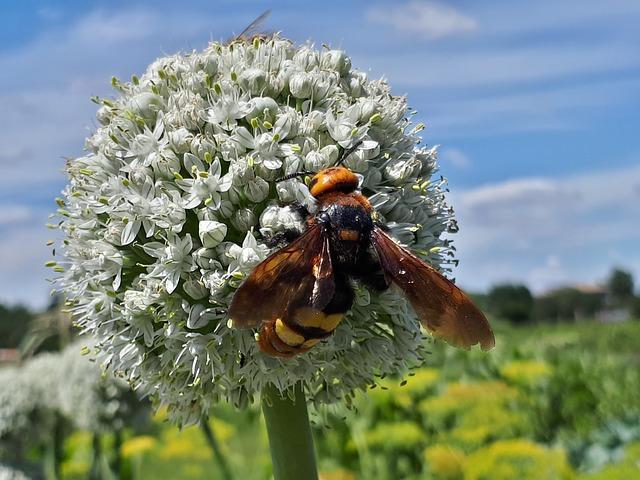 Nepodceňte alergiu na bodnutie hmyzom