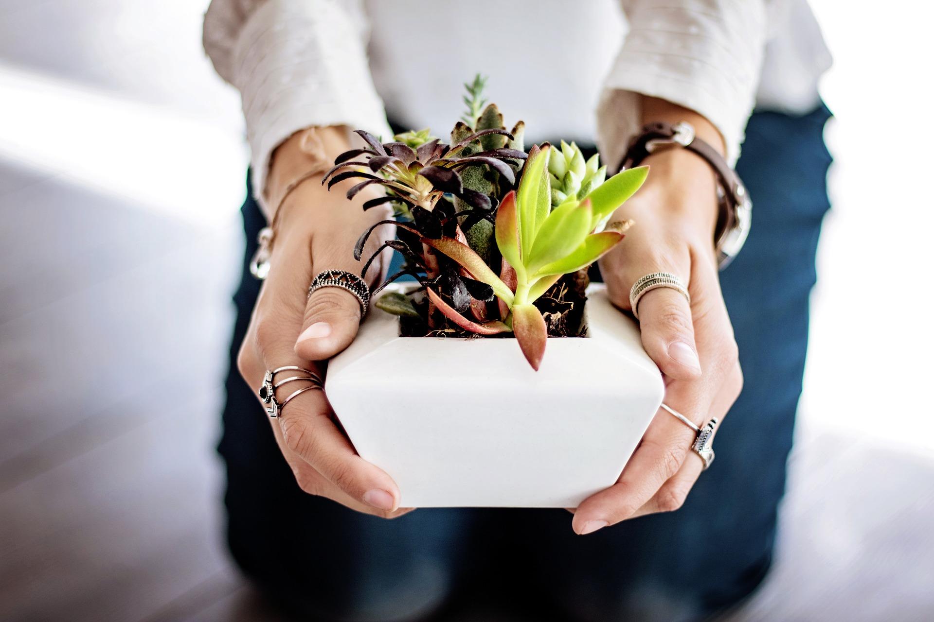 Kvety v byte majú svoje ukľudňujúce účinky